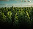 green-legacy-thumbnail